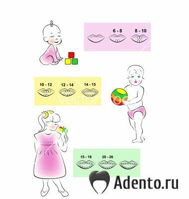 схему прорезывания зубов у