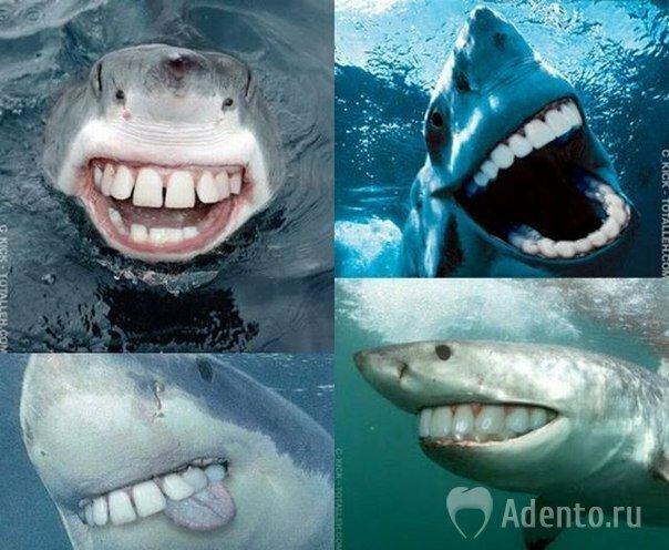 изображение акулы: