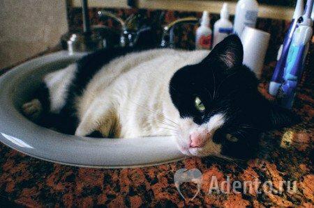 запах изо рта у кошки после стерилизации